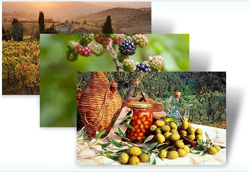 W7 harvest theme