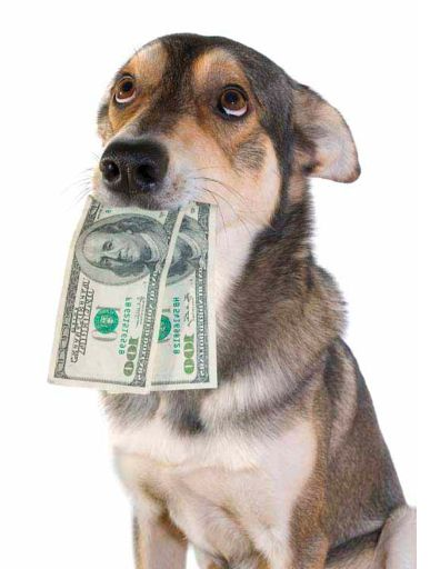 Make Money Dog Walking